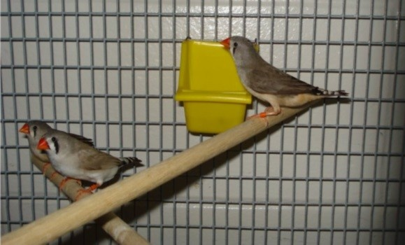 Dalhousie University: Stop Animal Experimentation!